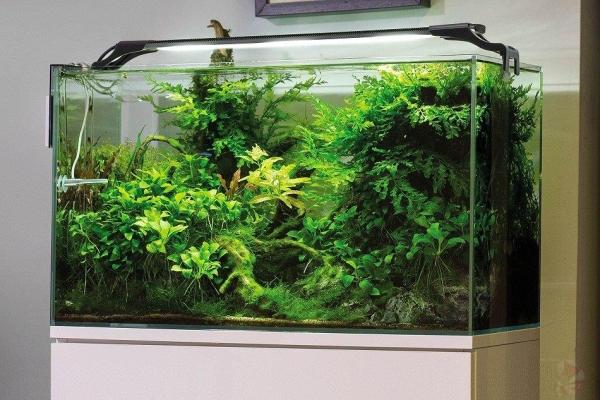 AquaEL LEDDY Slim 50-70cm 10W plant