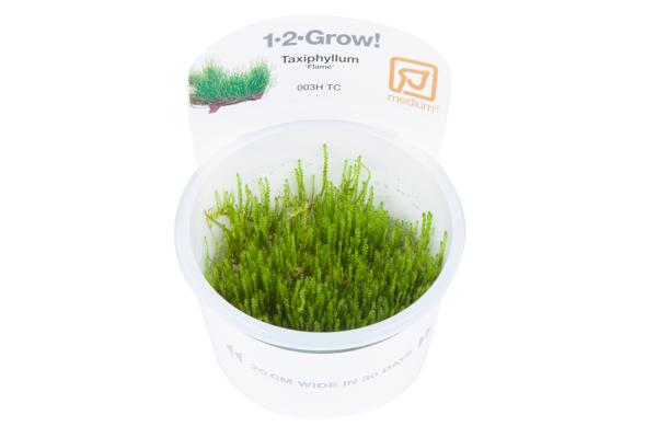 Taxiphyllum Flame 1-2-Grow!