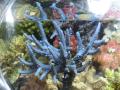 Grotech Reefspy